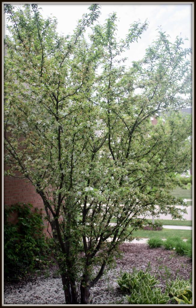 Tree - May 2013