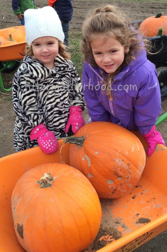 mimm - sophia isabella pumpkins