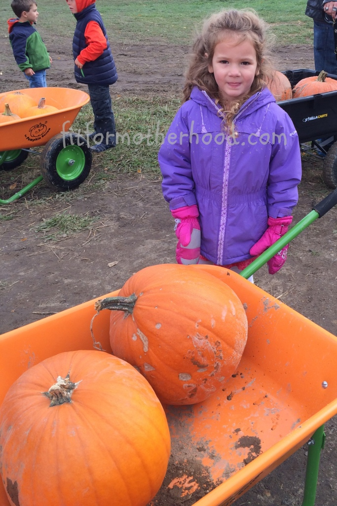 mimm - sophia pumpkins