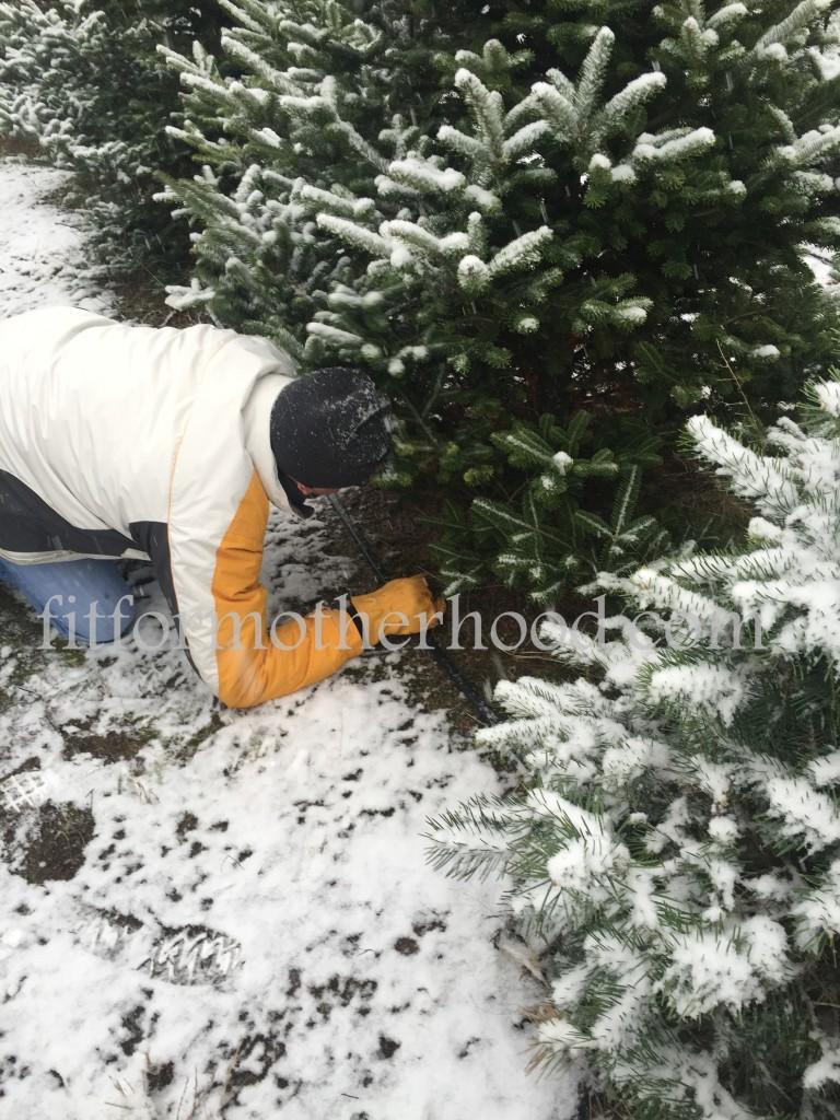 mimm - tree hunting 2015 daddy cutting