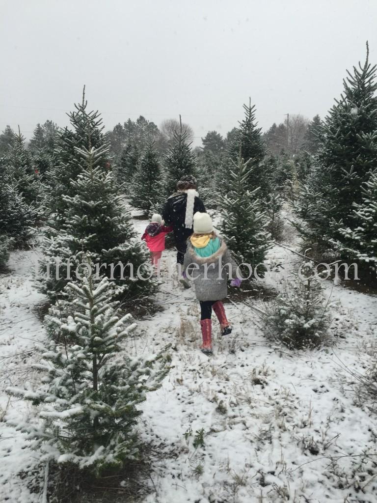 mimm - tree hunting 2015 mimi mckenzie isabella backs