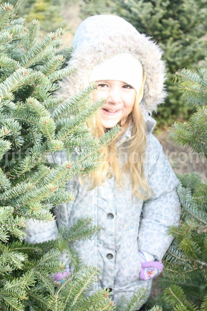 christmas-tree-isabella