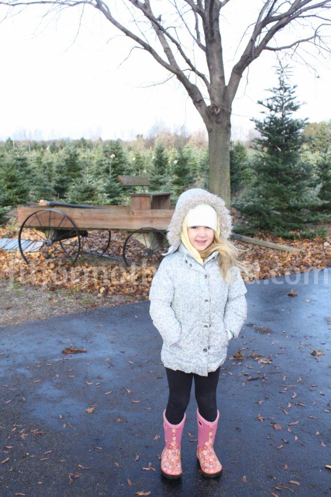 christmas-tree-isabella-before