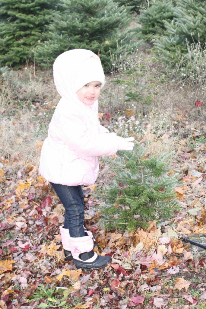 christmas-tree-mckaylas-tree