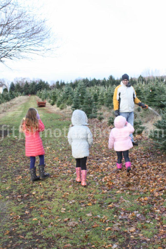 christmas-tree-picking-tree