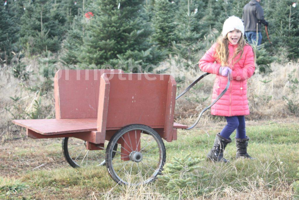 christmas-tree-sophia-cart